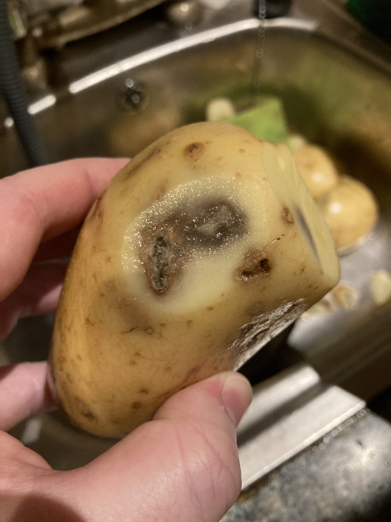 Hey @lidl_ireland do you think this potato I just brought home is in sellable or edible condition? Because I don't
